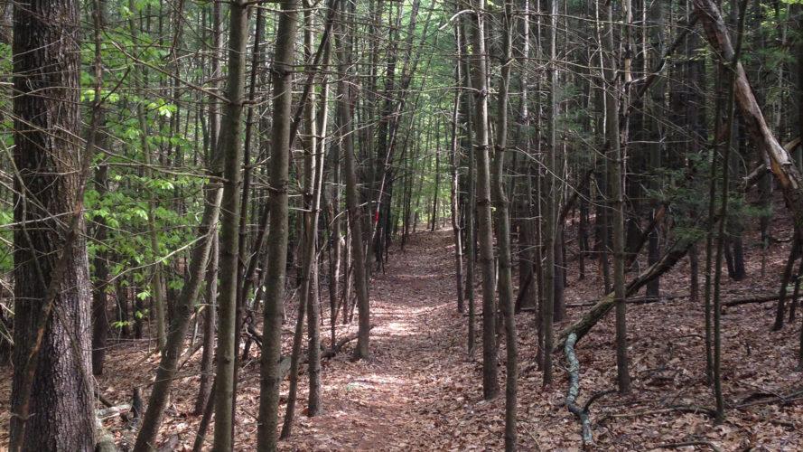 Mystery Hike